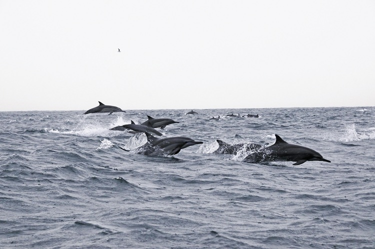 Dolphin and sunrise watching - Majorca things to do for kids